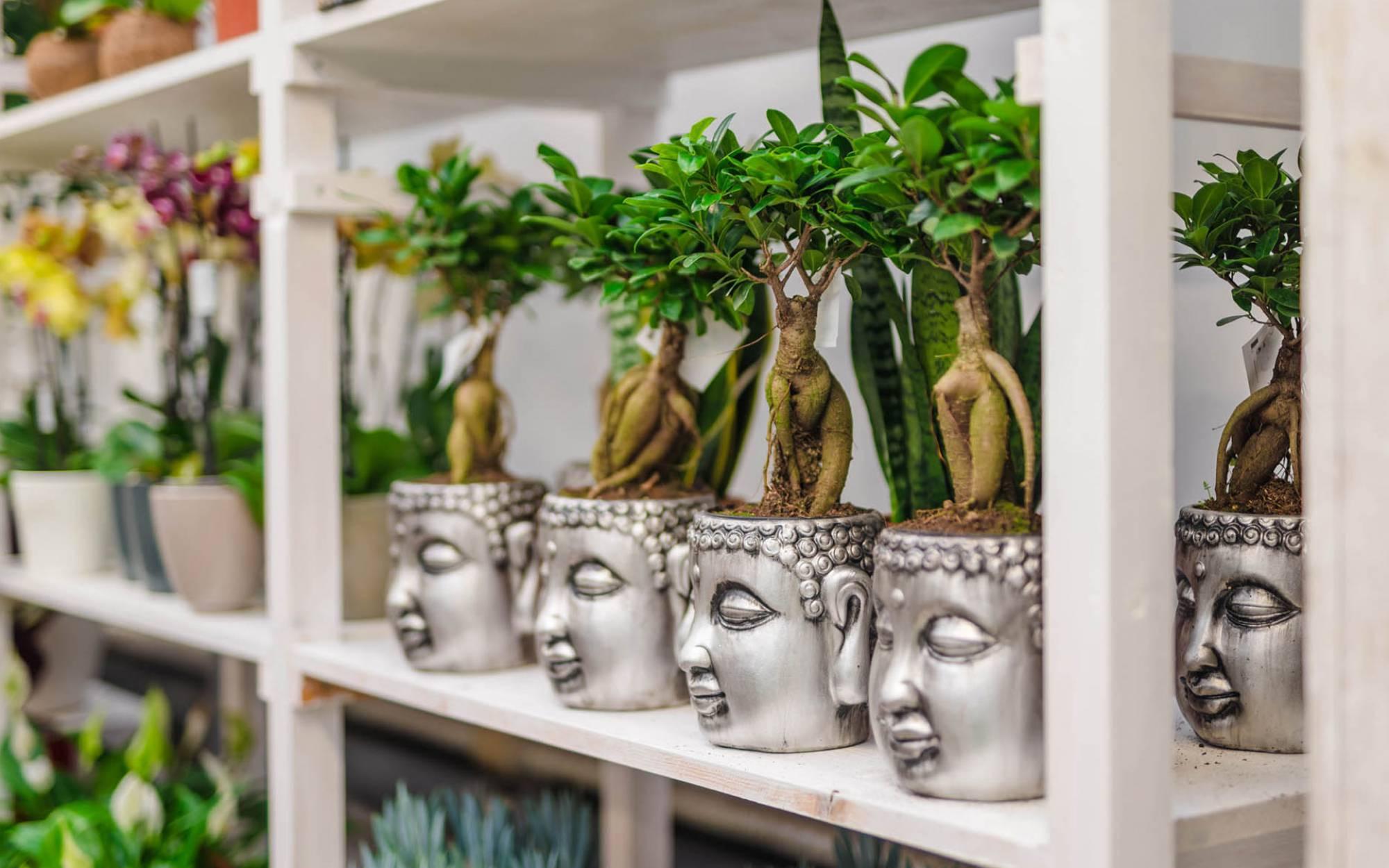 Fiori Da Balcone Perenni piante e fiori | bema giardini - living garden