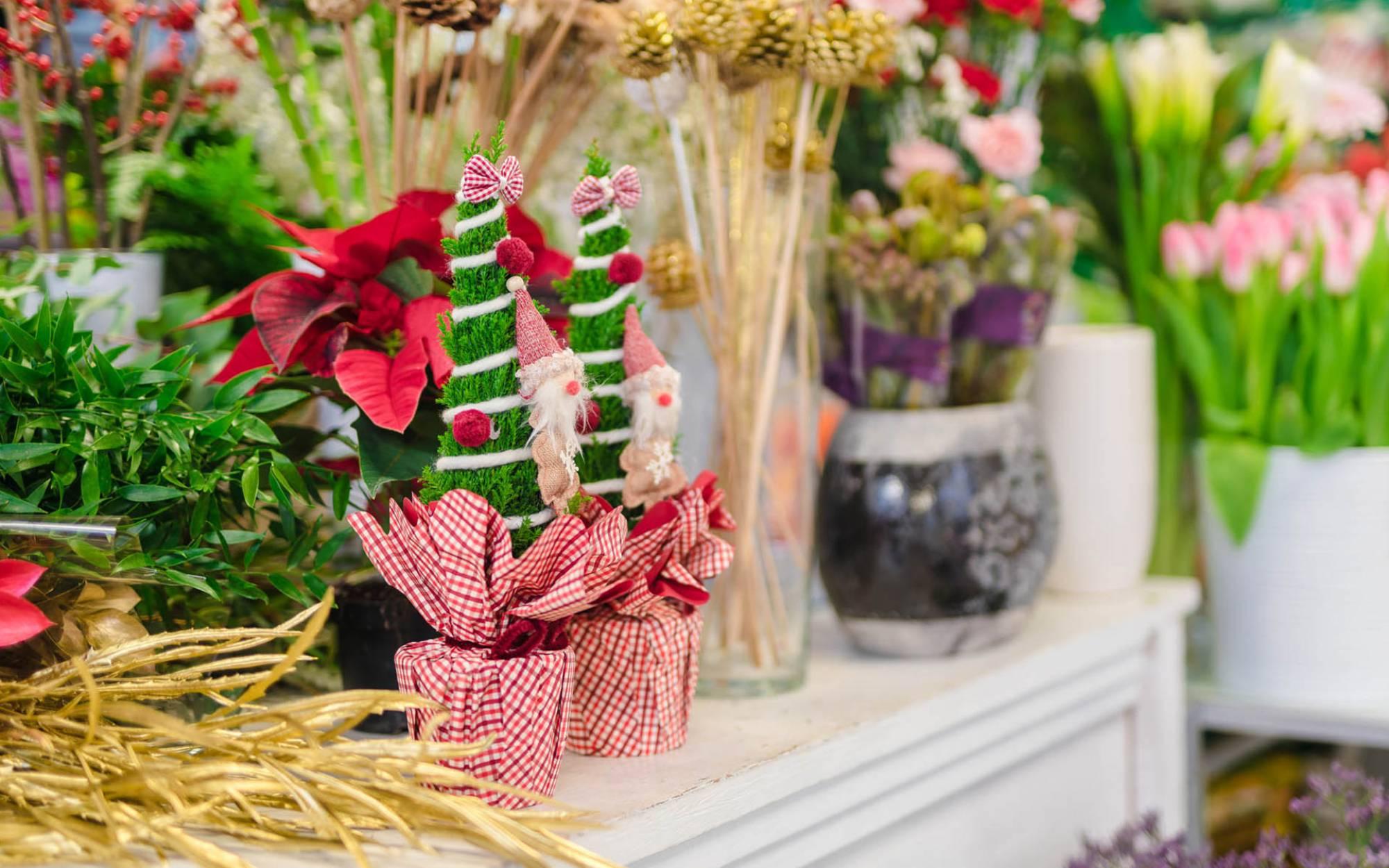 Immagini Piante E Fiori piante e fiori   bema giardini - living garden